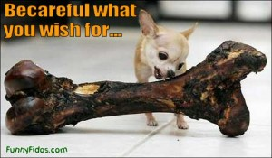 funny-dog-picture-careful-what-you-wish-for-300x175
