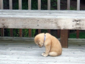 puppy all alone