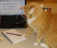 kitties writing aug 2015 004